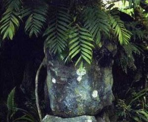 hollow rock planter