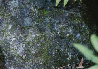 moss on rock artificial rock